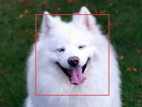 动物识别接口-宠物识别-动物图片识别